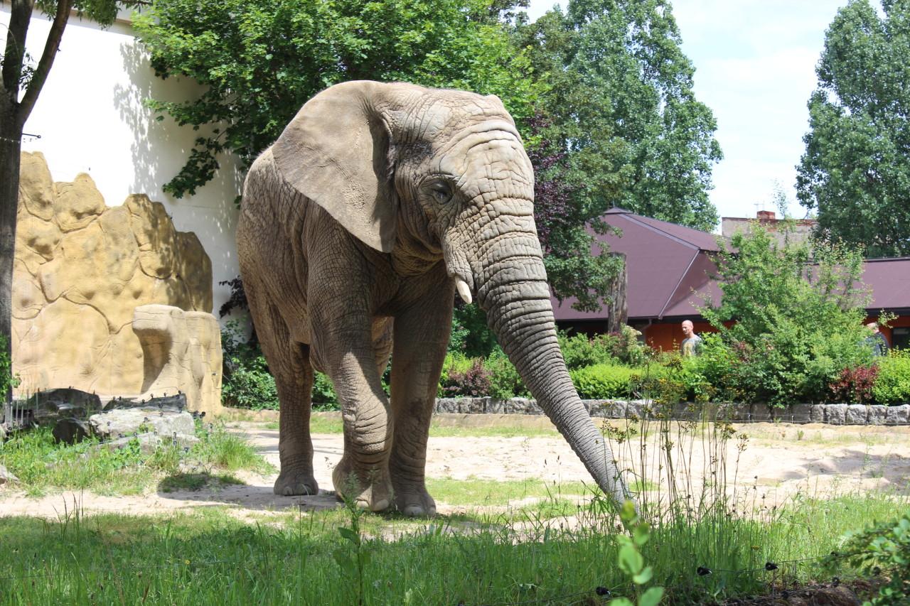 Turistika – Zoo Dvůr Králové