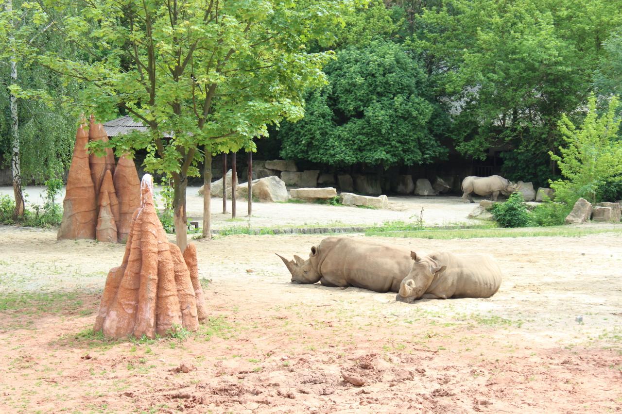 Turistika – Zoo Dvůr Králové nad Labem