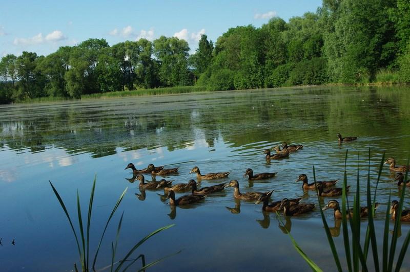 Velký Vřešťov – Lhotecký rybník