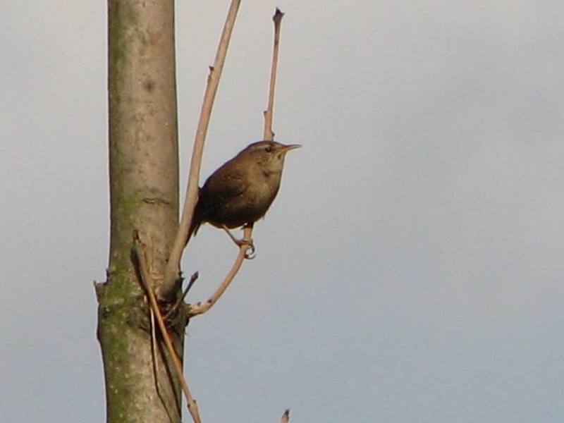 Příroda – poznáte tohoto ptáčka?