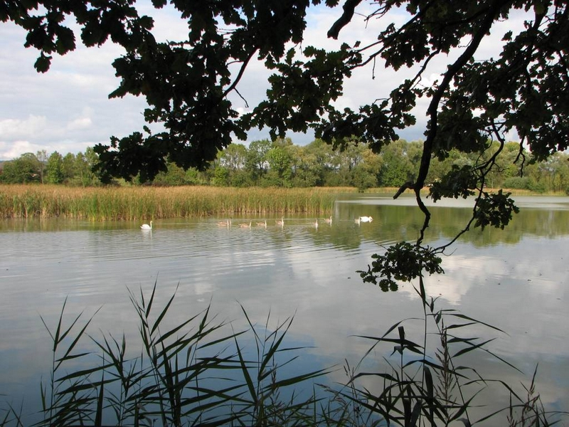 Příroda – Lhotecký rybník