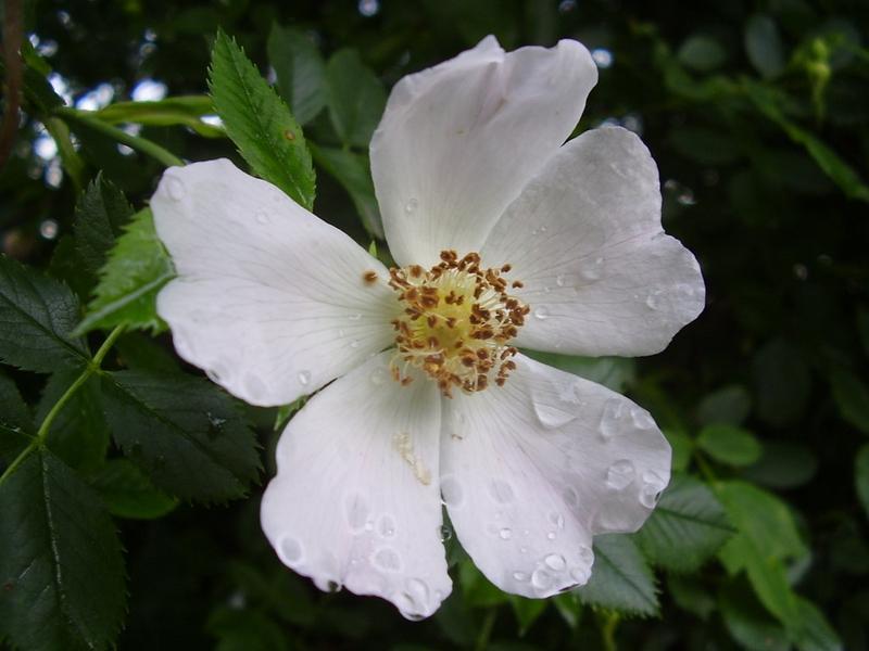Příroda – květ