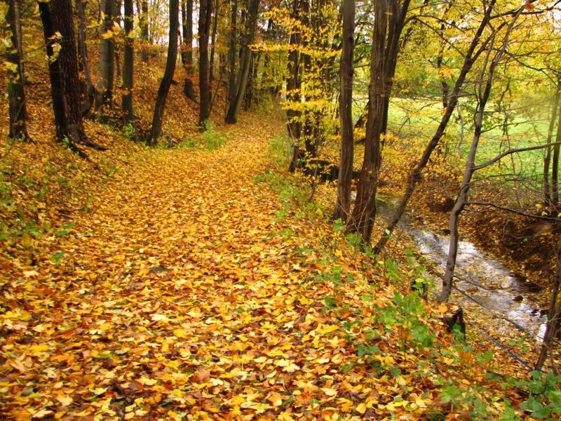 Příroda – cesta podzimem, park v Bílých Poličanech